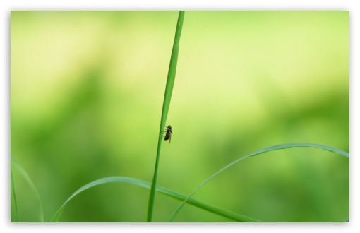 Fly On A Blade Of Grass ❤ 4K UHD Wallpaper for Wide 16:10 5:3 Widescreen WHXGA WQXGA WUXGA WXGA WGA ; 4K UHD 16:9 Ultra High Definition 2160p 1440p 1080p 900p 720p ; Standard 4:3 5:4 3:2 Fullscreen UXGA XGA SVGA QSXGA SXGA DVGA HVGA HQVGA ( Apple PowerBook G4 iPhone 4 3G 3GS iPod Touch ) ; Tablet 1:1 ; iPad 1/2/Mini ; Mobile 4:3 5:3 3:2 16:9 5:4 - UXGA XGA SVGA WGA DVGA HVGA HQVGA ( Apple PowerBook G4 iPhone 4 3G 3GS iPod Touch ) 2160p 1440p 1080p 900p 720p QSXGA SXGA ;