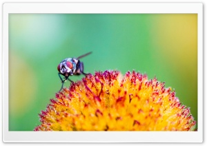 Fly on a Flower HD Wide Wallpaper for Widescreen