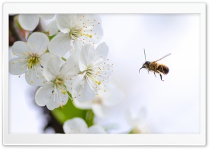Flying Bee in Action HD Wide Wallpaper for Widescreen