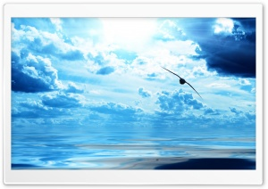 Flying Seagull HD Wide Wallpaper for Widescreen