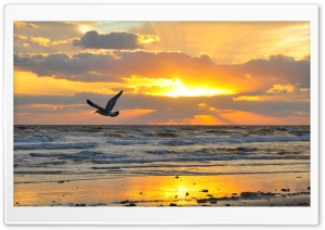 Flying Seagull At Sunrise HD Wide Wallpaper for 4K UHD Widescreen desktop & smartphone