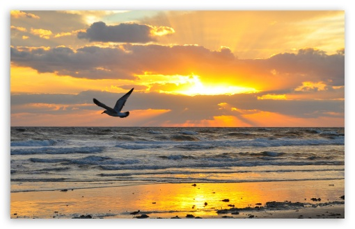 Flying Seagull At Sunrise ❤ 4K UHD Wallpaper for Wide 16:10 5:3 Widescreen WHXGA WQXGA WUXGA WXGA WGA ; 4K UHD 16:9 Ultra High Definition 2160p 1440p 1080p 900p 720p ; Standard 4:3 5:4 3:2 Fullscreen UXGA XGA SVGA QSXGA SXGA DVGA HVGA HQVGA ( Apple PowerBook G4 iPhone 4 3G 3GS iPod Touch ) ; Tablet 1:1 ; iPad 1/2/Mini ; Mobile 4:3 5:3 3:2 16:9 5:4 - UXGA XGA SVGA WGA DVGA HVGA HQVGA ( Apple PowerBook G4 iPhone 4 3G 3GS iPod Touch ) 2160p 1440p 1080p 900p 720p QSXGA SXGA ; Dual 16:10 5:3 16:9 4:3 5:4 WHXGA WQXGA WUXGA WXGA WGA 2160p 1440p 1080p 900p 720p UXGA XGA SVGA QSXGA SXGA ;
