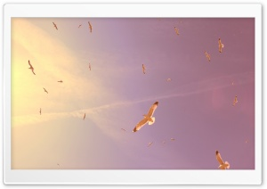 Flying Seagulls HD Wide Wallpaper for Widescreen