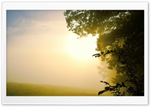 Fog HD Wide Wallpaper for Widescreen