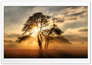 Fog Across The Field HD Wide Wallpaper for Widescreen