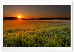 Fog At Sunrise HD Wide Wallpaper for Widescreen