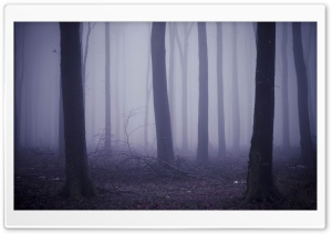 Fog In The Forest HD Wide Wallpaper for Widescreen