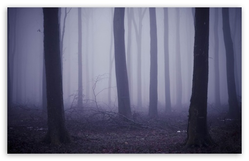 Fog In The Forest HD wallpaper for Wide 16:10 5:3 Widescreen WHXGA WQXGA WUXGA WXGA WGA ; HD 16:9 High Definition WQHD QWXGA 1080p 900p 720p QHD nHD ; Standard 4:3 5:4 3:2 Fullscreen UXGA XGA SVGA QSXGA SXGA DVGA HVGA HQVGA devices ( Apple PowerBook G4 iPhone 4 3G 3GS iPod Touch ) ; Tablet 1:1 ; iPad 1/2/Mini ; Mobile 4:3 5:3 3:2 16:9 5:4 - UXGA XGA SVGA WGA DVGA HVGA HQVGA devices ( Apple PowerBook G4 iPhone 4 3G 3GS iPod Touch ) WQHD QWXGA 1080p 900p 720p QHD nHD QSXGA SXGA ; Dual 5:4 QSXGA SXGA ;