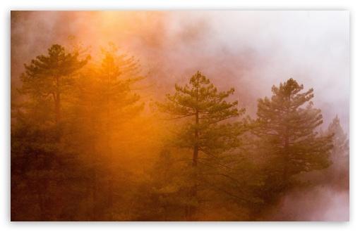 Download Fog Shrouded Forest HD Wallpaper