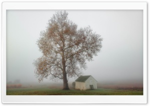 Fog, Tree, House, Autumn Ultra HD Wallpaper for 4K UHD Widescreen desktop, tablet & smartphone