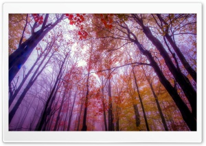 Foggy Colors HD Wide Wallpaper for Widescreen