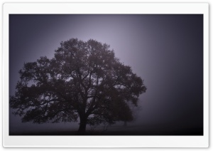 Foggy Day HD Wide Wallpaper for Widescreen
