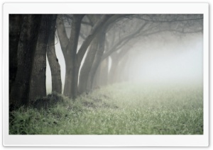 Foggy Day In The Forest HD Wide Wallpaper for Widescreen