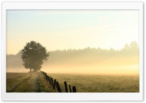 Foggy Field, Morning HD Wide Wallpaper for Widescreen