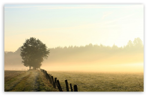 Foggy Field, Morning ❤ 4K UHD Wallpaper for Wide 16:10 5:3 Widescreen WHXGA WQXGA WUXGA WXGA WGA ; 4K UHD 16:9 Ultra High Definition 2160p 1440p 1080p 900p 720p ; UHD 16:9 2160p 1440p 1080p 900p 720p ; Standard 4:3 5:4 3:2 Fullscreen UXGA XGA SVGA QSXGA SXGA DVGA HVGA HQVGA ( Apple PowerBook G4 iPhone 4 3G 3GS iPod Touch ) ; Tablet 1:1 ; iPad 1/2/Mini ; Mobile 4:3 5:3 3:2 16:9 5:4 - UXGA XGA SVGA WGA DVGA HVGA HQVGA ( Apple PowerBook G4 iPhone 4 3G 3GS iPod Touch ) 2160p 1440p 1080p 900p 720p QSXGA SXGA ; Dual 4:3 5:4 UXGA XGA SVGA QSXGA SXGA ;
