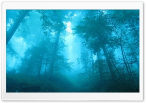 Foggy Forest HD Wide Wallpaper for 4K UHD Widescreen desktop & smartphone