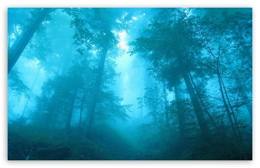 Foggy Forest HD wallpaper for Wide 16:10 5:3 Widescreen WHXGA WQXGA WUXGA WXGA WGA ; HD 16:9 High Definition WQHD QWXGA 1080p 900p 720p QHD nHD ; Standard 4:3 5:4 3:2 Fullscreen UXGA XGA SVGA QSXGA SXGA DVGA HVGA HQVGA devices ( Apple PowerBook G4 iPhone 4 3G 3GS iPod Touch ) ; Tablet 1:1 ; iPad 1/2/Mini ; Mobile 4:3 5:3 3:2 16:9 5:4 - UXGA XGA SVGA WGA DVGA HVGA HQVGA devices ( Apple PowerBook G4 iPhone 4 3G 3GS iPod Touch ) WQHD QWXGA 1080p 900p 720p QHD nHD QSXGA SXGA ;