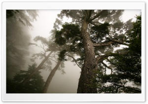 Foggy Forest HD Wide Wallpaper for Widescreen