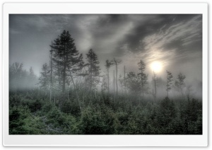 Foggy Forest HDR HD Wide Wallpaper for Widescreen