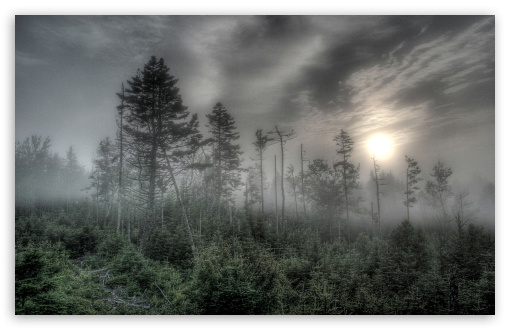 Foggy Forest HDR HD desktop wallpaper : Widescreen : High