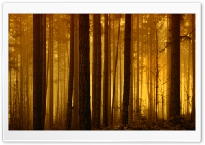 Foggy Forest Sunrise HD Wide Wallpaper for Widescreen