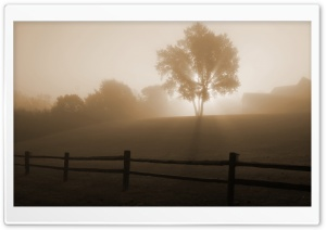 Foggy Morning HD Wide Wallpaper for Widescreen