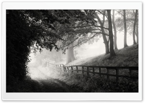 Foggy Morning, Road, Black and White Ultra HD Wallpaper for 4K UHD Widescreen desktop, tablet & smartphone
