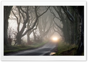 Foggy Road And Tangled Trees HD Wide Wallpaper for Widescreen