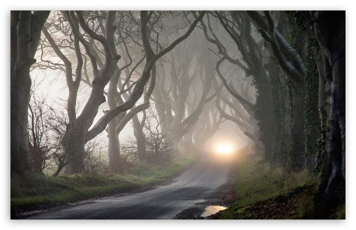 Foggy Road And Tangled Trees HD wallpaper for Wide 16:10 5:3 Widescreen WHXGA WQXGA WUXGA WXGA WGA ; HD 16:9 High Definition WQHD QWXGA 1080p 900p 720p QHD nHD ; Standard 4:3 5:4 3:2 Fullscreen UXGA XGA SVGA QSXGA SXGA DVGA HVGA HQVGA devices ( Apple PowerBook G4 iPhone 4 3G 3GS iPod Touch ) ; Tablet 1:1 ; iPad 1/2/Mini ; Mobile 4:3 5:3 3:2 16:9 5:4 - UXGA XGA SVGA WGA DVGA HVGA HQVGA devices ( Apple PowerBook G4 iPhone 4 3G 3GS iPod Touch ) WQHD QWXGA 1080p 900p 720p QHD nHD QSXGA SXGA ; Dual 16:10 5:3 16:9 4:3 5:4 WHXGA WQXGA WUXGA WXGA WGA WQHD QWXGA 1080p 900p 720p QHD nHD UXGA XGA SVGA QSXGA SXGA ;