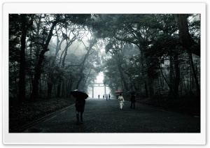 Foggy Walk HD Wide Wallpaper for Widescreen