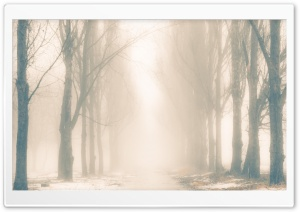 Foggy Winter Day HD Wide Wallpaper for Widescreen