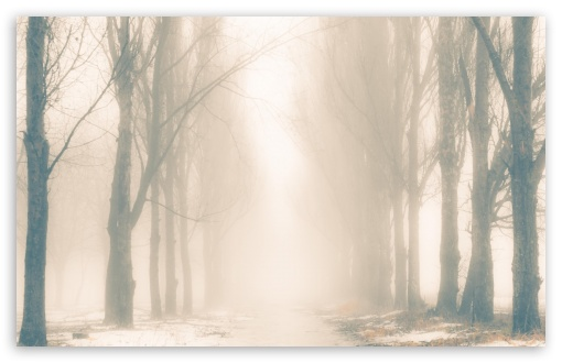 Foggy Winter Day HD wallpaper for Wide 16:10 5:3 Widescreen WHXGA WQXGA WUXGA WXGA WGA ; HD 16:9 High Definition WQHD QWXGA 1080p 900p 720p QHD nHD ; Standard 4:3 5:4 3:2 Fullscreen UXGA XGA SVGA QSXGA SXGA DVGA HVGA HQVGA devices ( Apple PowerBook G4 iPhone 4 3G 3GS iPod Touch ) ; Tablet 1:1 ; iPad 1/2/Mini ; Mobile 4:3 5:3 3:2 16:9 5:4 - UXGA XGA SVGA WGA DVGA HVGA HQVGA devices ( Apple PowerBook G4 iPhone 4 3G 3GS iPod Touch ) WQHD QWXGA 1080p 900p 720p QHD nHD QSXGA SXGA ; Dual 16:10 5:3 16:9 4:3 5:4 WHXGA WQXGA WUXGA WXGA WGA WQHD QWXGA 1080p 900p 720p QHD nHD UXGA XGA SVGA QSXGA SXGA ;