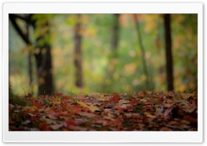 Foliage HD Wide Wallpaper for Widescreen