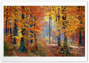 Foliage, Autumn HD Wide Wallpaper for Widescreen