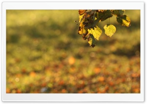 Foliage Bokeh HD Wide Wallpaper for Widescreen