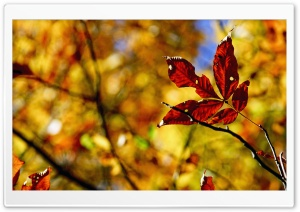 Foliage Bokeh, Autumn HD Wide Wallpaper for 4K UHD Widescreen desktop & smartphone