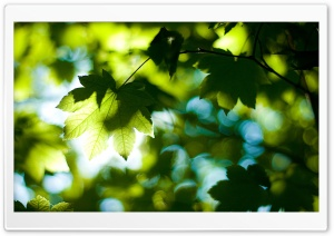 Foliage, Summer HD Wide Wallpaper for Widescreen
