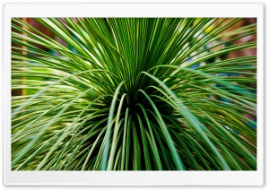 Follow The Cactus Ultra HD Wallpaper for 4K UHD Widescreen desktop, tablet & smartphone