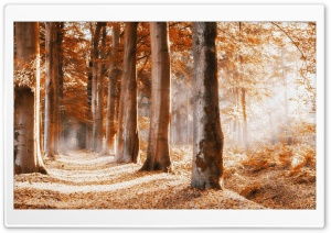 Follow The Path HD Wide Wallpaper for Widescreen