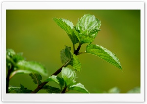 FoMef Green Mint 5K HD Wide Wallpaper for Widescreen