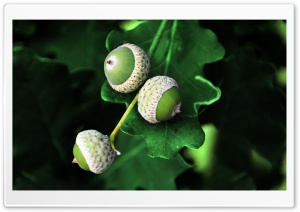 FoMef Nature Shoots - Nuts HD Wide Wallpaper for Widescreen