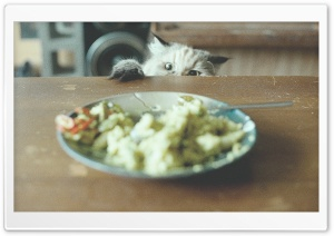 Food Thief HD Wide Wallpaper for Widescreen