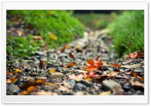 Footpath HD Wide Wallpaper for Widescreen