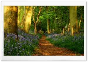 Footpath Ultra HD Wallpaper for 4K UHD Widescreen desktop, tablet & smartphone