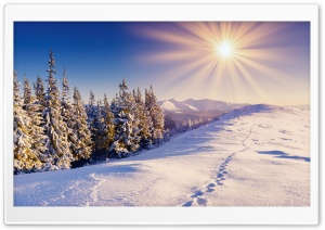Footprints In The Snow HD Wide Wallpaper for Widescreen