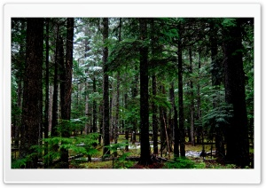 Forest 15 HD Wide Wallpaper for Widescreen