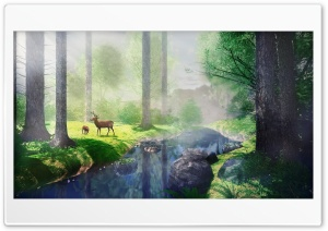 Forest HD Wide Wallpaper for Widescreen