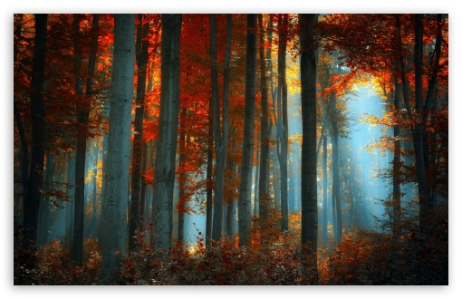Forest HD wallpaper for Standard 4:3 5:4 Fullscreen UXGA XGA SVGA QSXGA SXGA ; Wide 16:10 5:3 Widescreen WHXGA WQXGA WUXGA WXGA WGA ; HD 16:9 High Definition WQHD QWXGA 1080p 900p 720p QHD nHD ; Other 3:2 DVGA HVGA HQVGA devices ( Apple PowerBook G4 iPhone 4 3G 3GS iPod Touch ) ; Mobile VGA WVGA iPhone iPad PSP Phone - VGA QVGA Smartphone ( PocketPC GPS iPod Zune BlackBerry HTC Samsung LG Nokia Eten Asus ) WVGA WQVGA Smartphone ( HTC Samsung Sony Ericsson LG Vertu MIO ) HVGA Smartphone ( Apple iPhone iPod BlackBerry HTC Samsung Nokia ) Sony PSP Zune HD Zen ; Tablet 2 Android ; Dual 4:3 5:4 16:10 5:3 UXGA XGA SVGA QSXGA SXGA WHXGA WQXGA WUXGA WXGA WGA ;