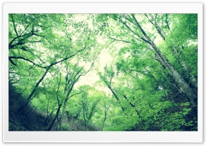 Forest 28 HD Wide Wallpaper for Widescreen
