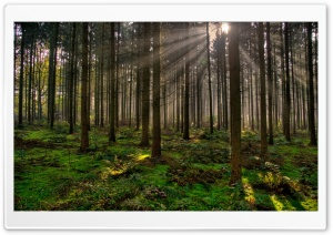 Forest 30 HD Wide Wallpaper for Widescreen